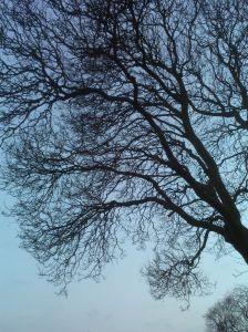 treewinterblog