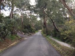 Everard Drive