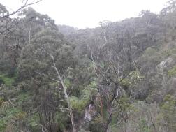Plenty Gorge