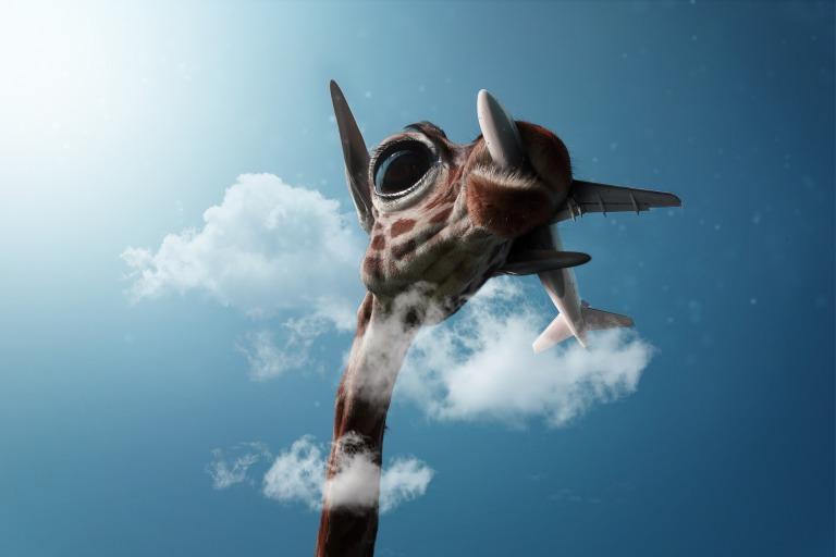 giraffe-3351363_1920